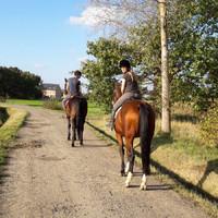 Sonessa - Paarden